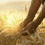 Image pour L'agriculture