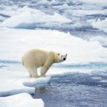 Image pour L'Arctique