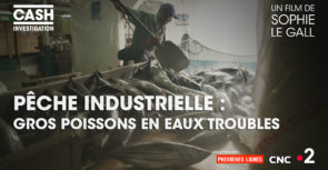 Pêche industrielle, gros poissons en eaux troubles