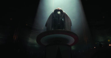 Dumbo contre les spectacles animaliers