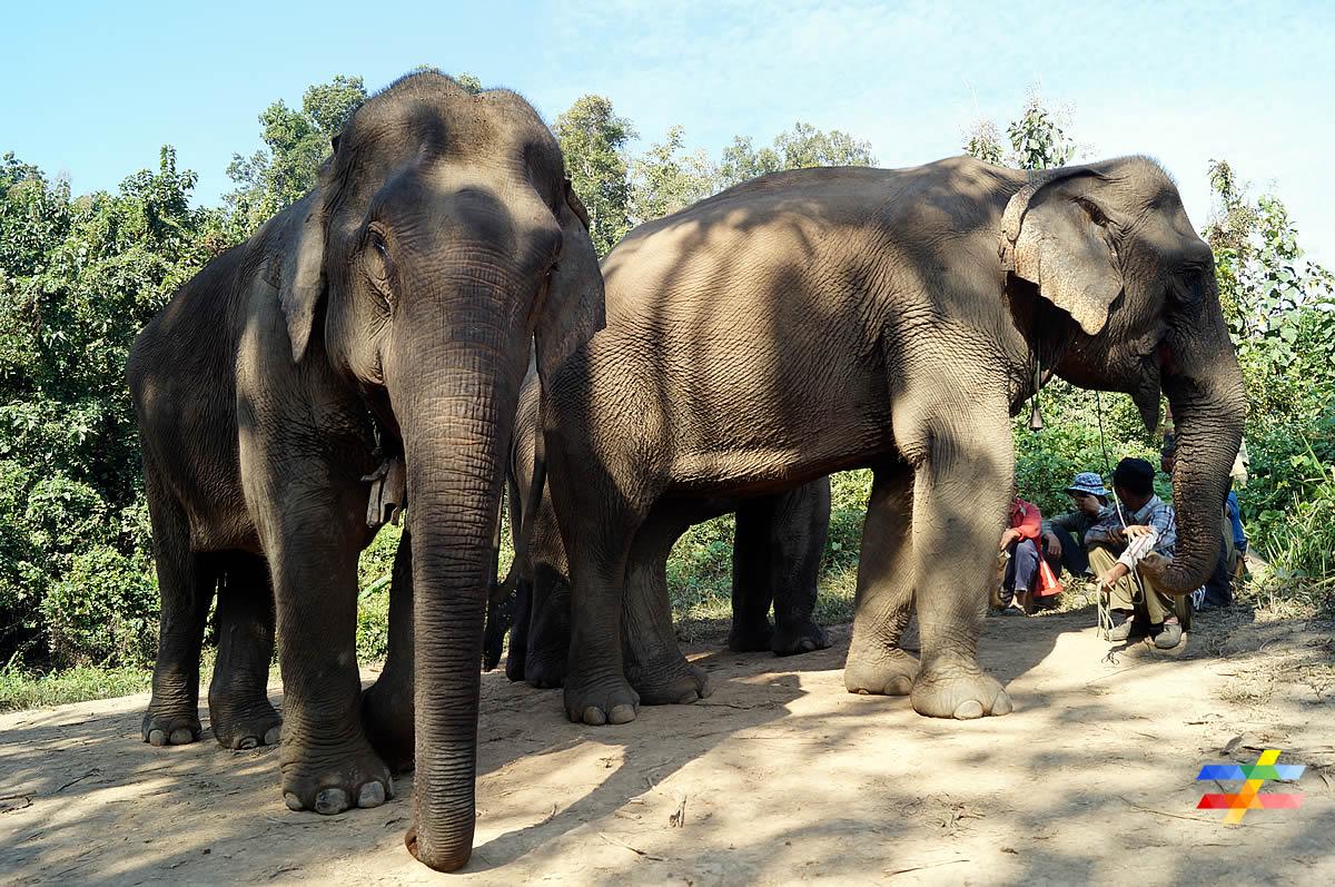 Eléphants avec leurs cornacs - différent.land