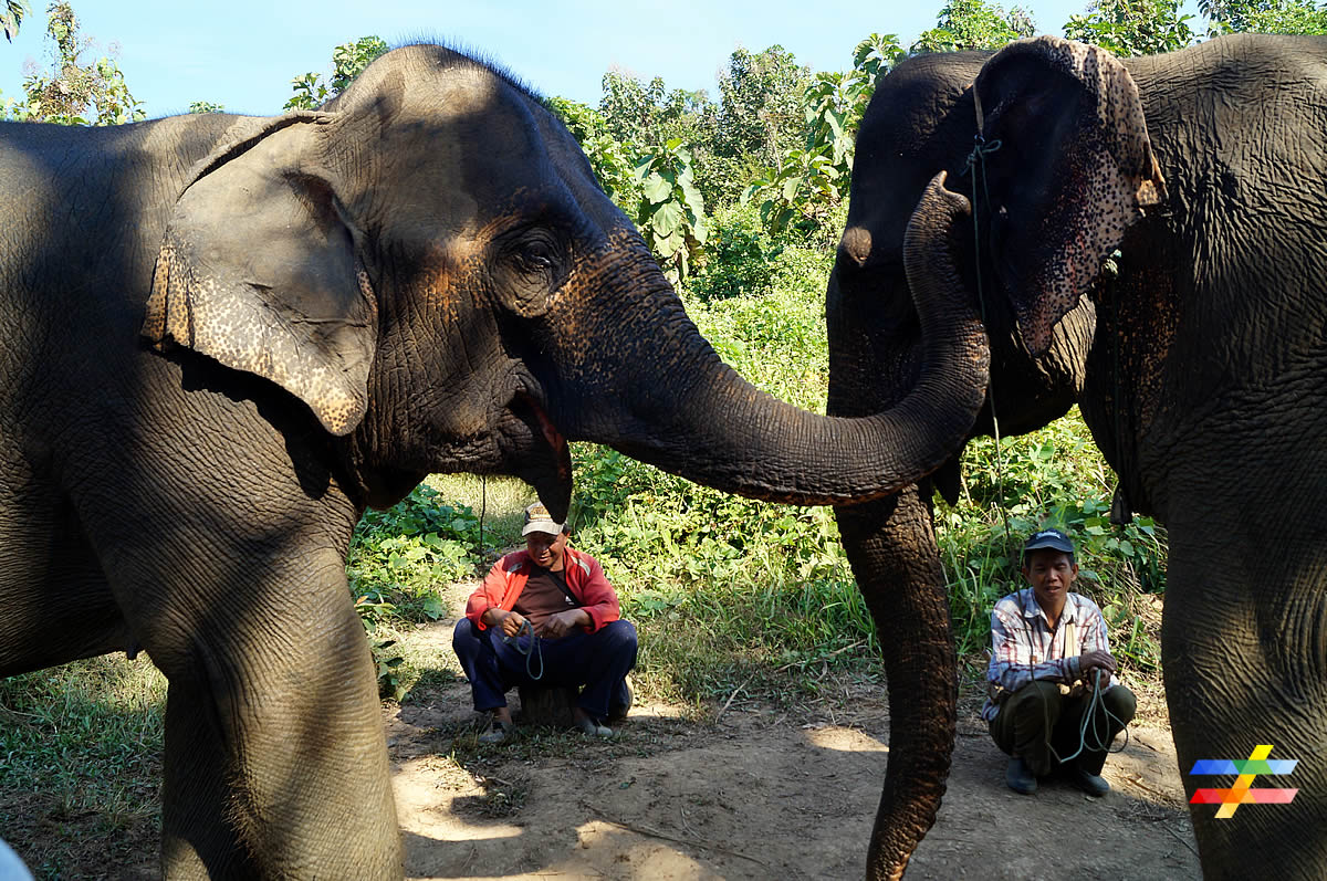 blog-ecc-elephants-different-land