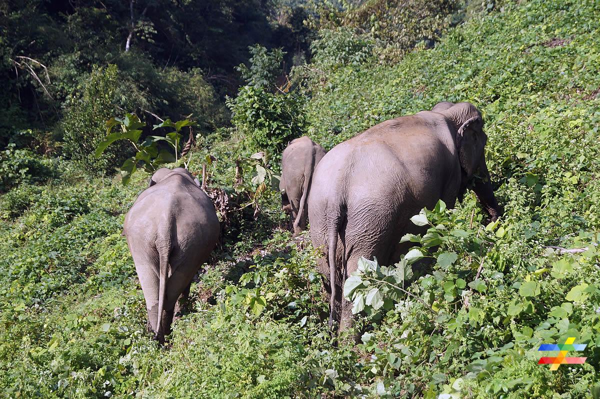 Eléphants dans la jungle - différent.land
