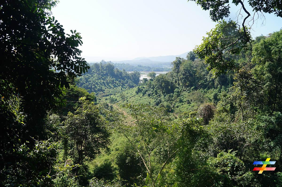 Vue d'ensemble du centre et de la forêt - différent.land