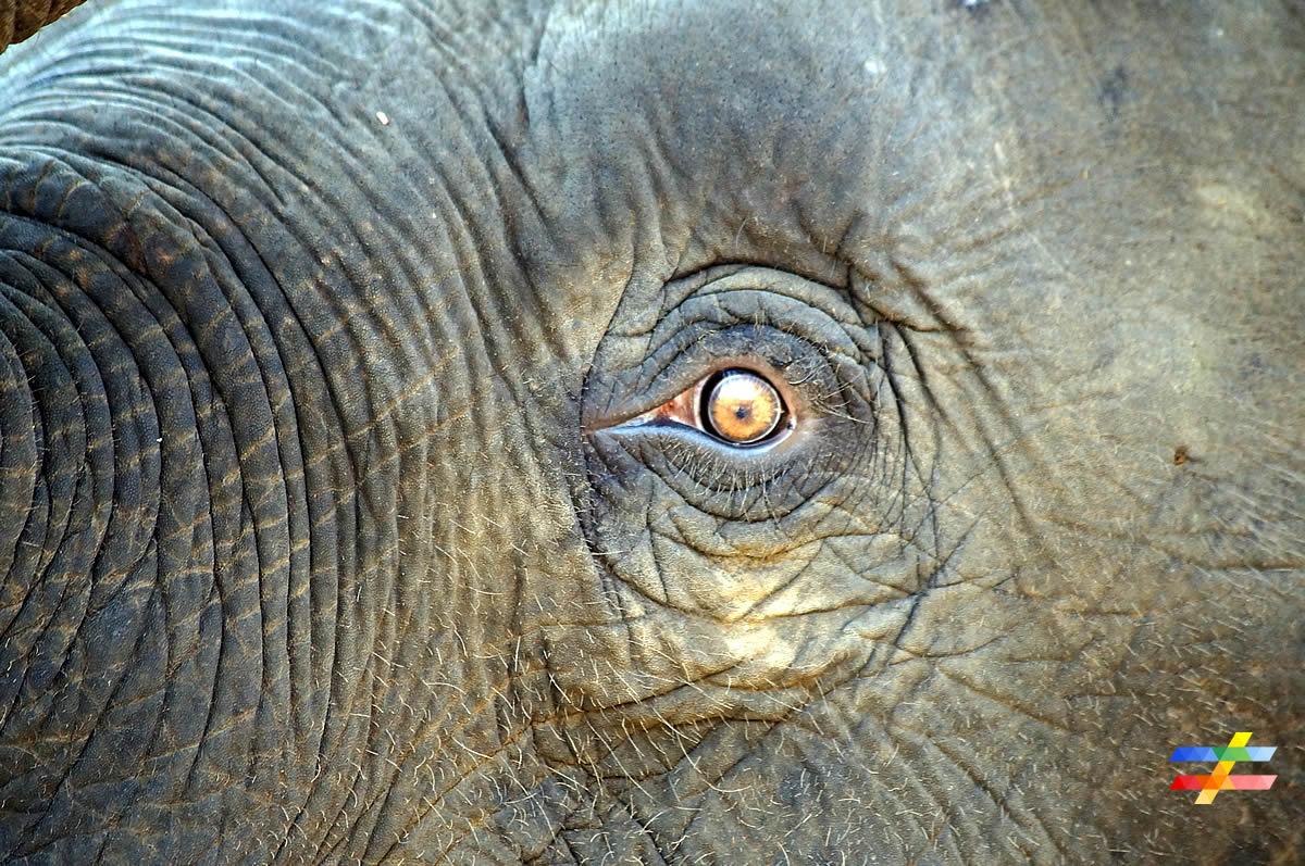 Elephant - différent.land