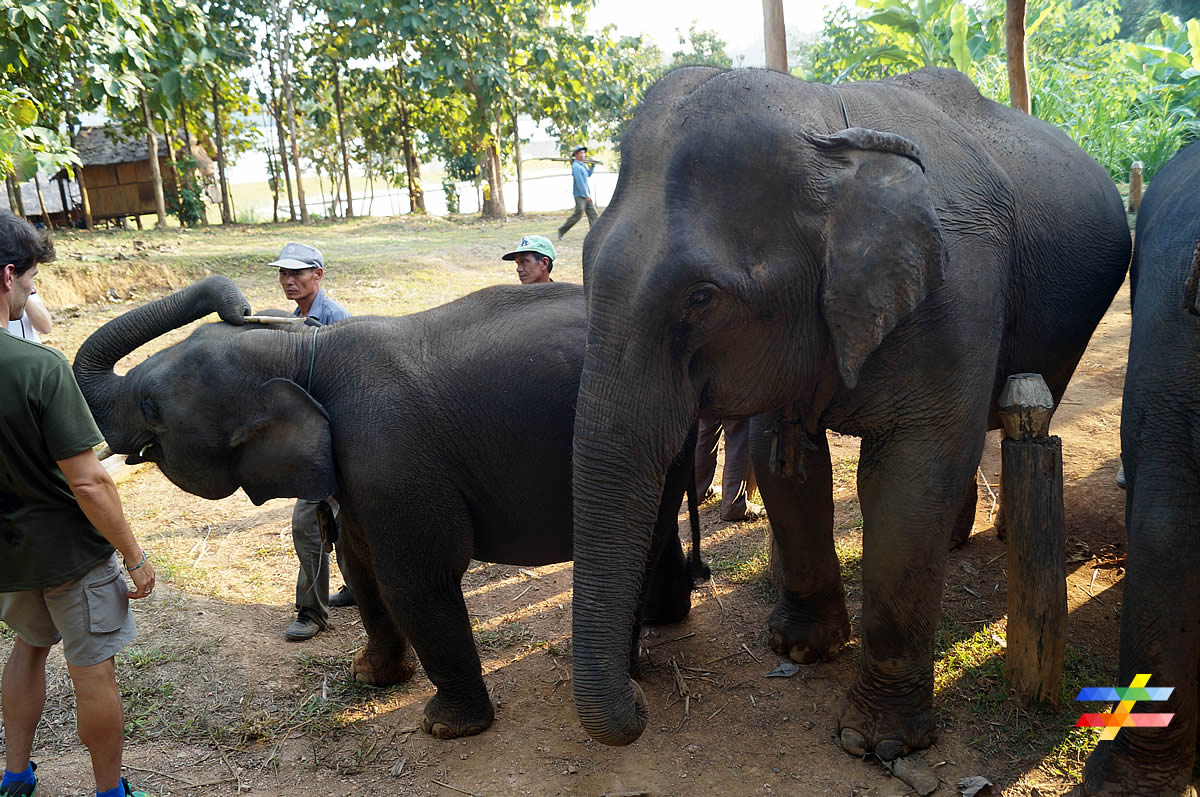 blog-ecc-rencontre-elephants-different-land