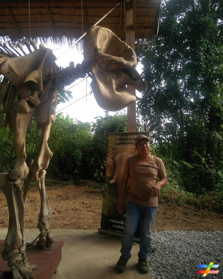 Photo du guide de l'ECC devant un squelette d'éléphant