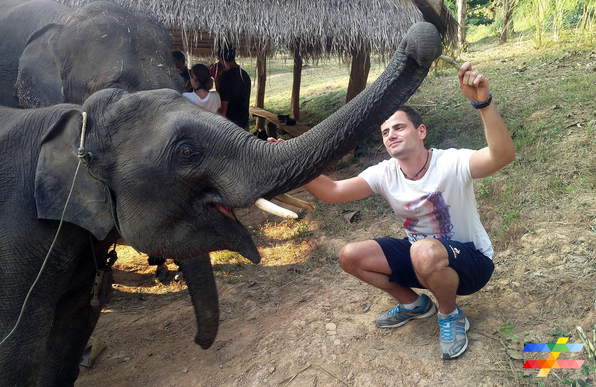 J'ai découvert pour vous l'Elephant Conservation Center du Laos.