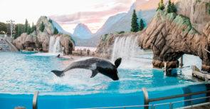 Faut-il interdire les delphinariums ?