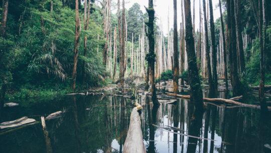 Photo de la forêt amazonienne