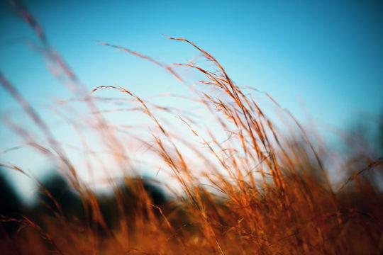 Photo de la savanne du Cerrado