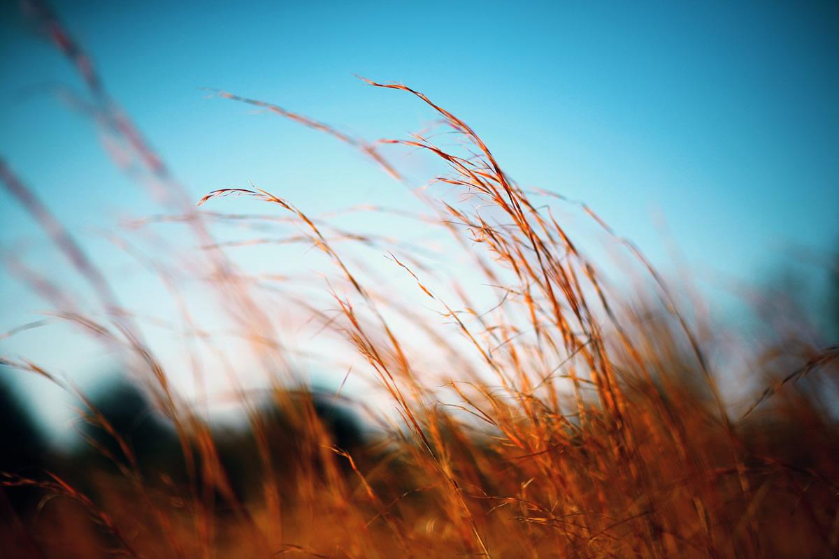 Blog : 61 entreprises au secours du Cerrado - différent.land