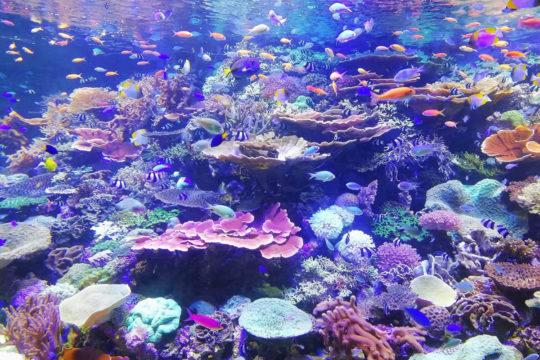 Photo de récifs coraliens