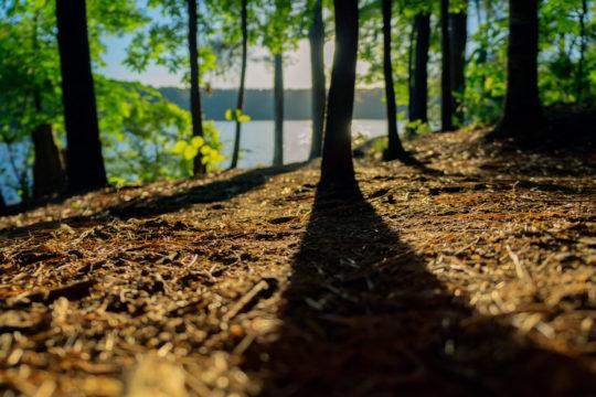 Photo d'une forêt sêche