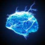 Image pour Le cerveau
