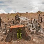 Image pour La déforestation