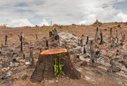 La déforestation