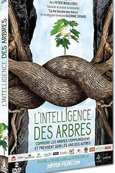documentaire : L'intelligence des arbres
