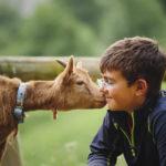 Image pour Leur enseigner l'Amour des animaux