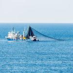 Image pour Eradiquer la surpêche