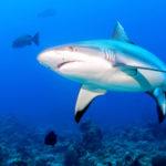Image pour L'extinction des requins