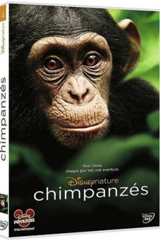 film : Chimpanzés