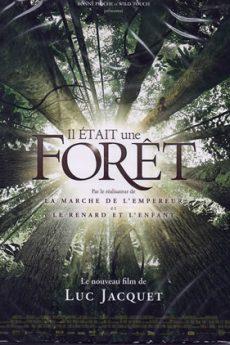 film : Il était une forêt