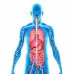 Image pour Le fonctionnement du corps humain