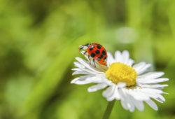 Imposer des alternatives aux pesticides