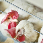 Image pour La maltraitance des animaux