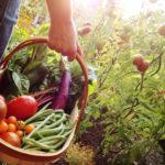 Image pour La permaculture