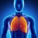 Image pour Les poumons