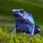 Image pour Préserver toute notre biodiversité