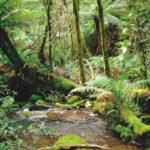 Image pour Préserver les forêts