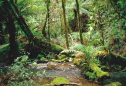 Préserver les forêts