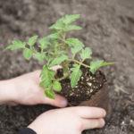 Image pour La raréfaction des terres arables