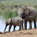 Image pour Sauver les derniers grands mammifères